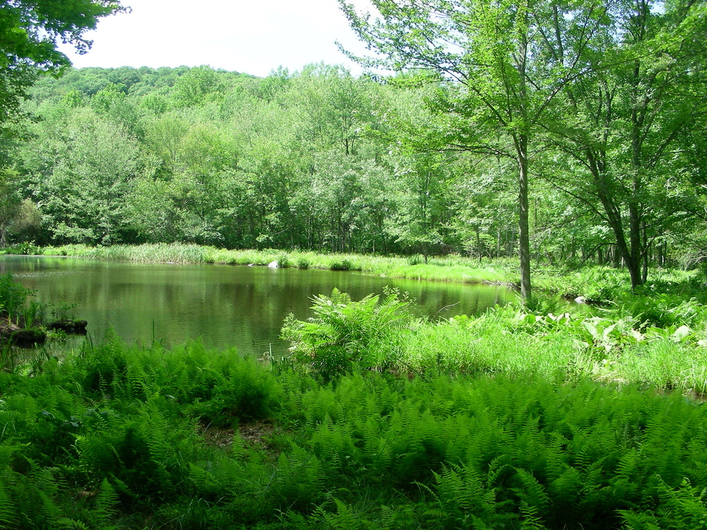 bkla studio - grove of native ferns