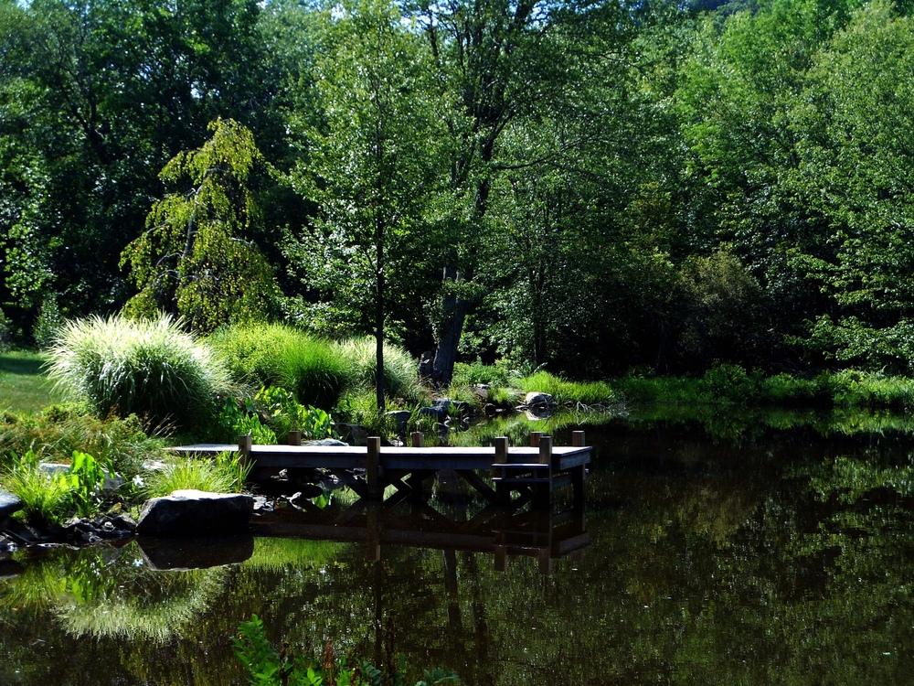 bkla studio - pond shoreline with established mitigation plantings