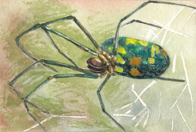 Amber Chiozza - Orchard Orbweaver. Watercolor. 2016.