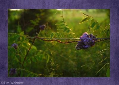 Tim Wehnert photographer -