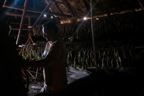 Alexis Aubin - Le tabac est séché dans les maisons de tabac avant dêtre vendu à lÉtat. Le processus prend environ 6 semaines.