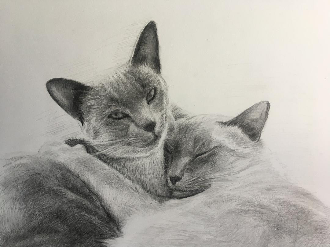 LoPresti Arts - Pet Portraiture/ graphite/pencil