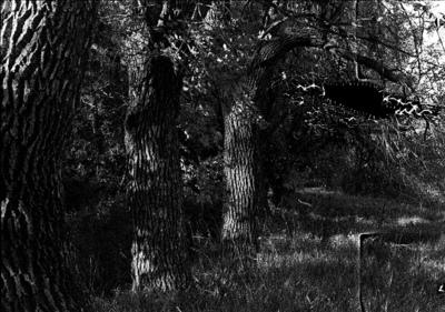 Jakob Schimpf Photography - Reticulated Negatives