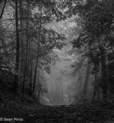 Sean Pinto photoGRAPHY - Mist at the Dukes Creek-GA - B/w