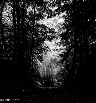Sean Pinto photoGRAPHY - Mist at the Dukes Creek-GA - B/w .. Low Key Render
