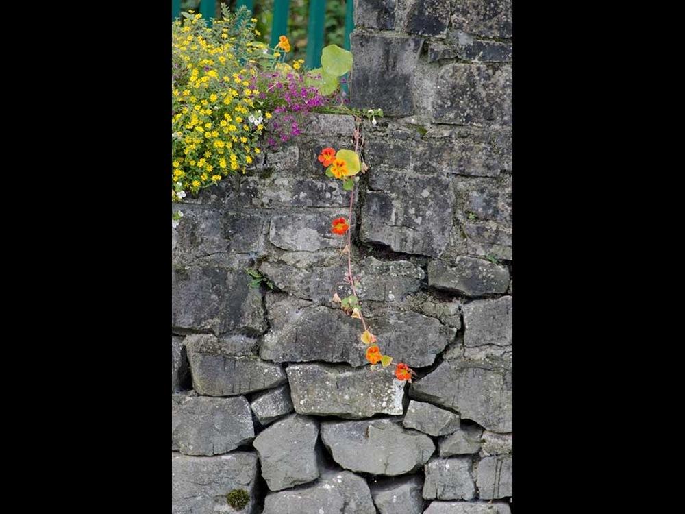 Pip Shepley - Wall, Cong Abbey