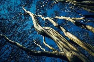 Frank Zhu Photography -