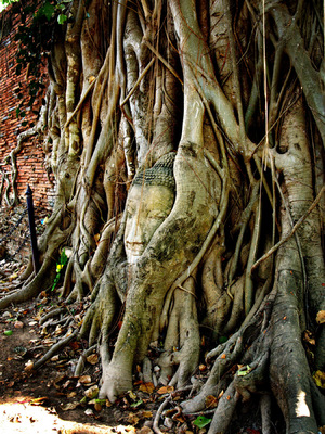 RADU JUSTER VISUAL ARTIST - Captive Buddha