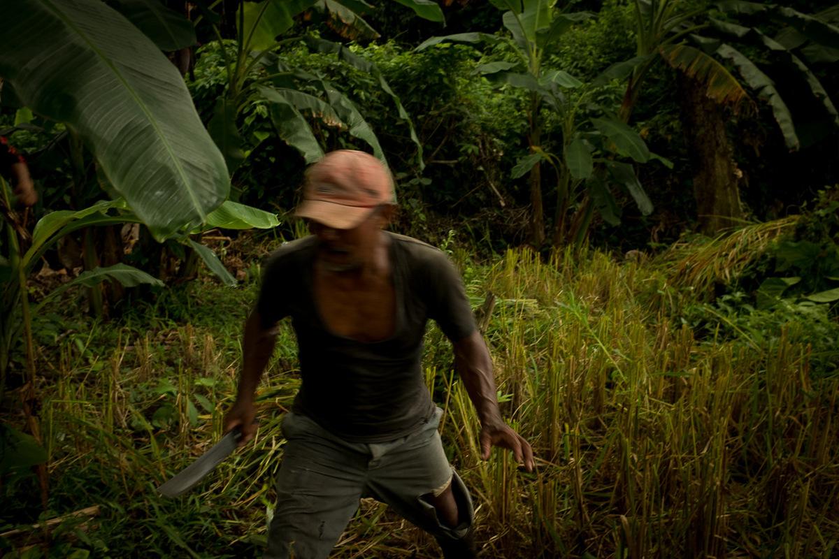 Adrienne Surprenant - Bape, le cacique, ou vieil homme du village de Bangkukuk Taik, au milieu de son champ de riz.