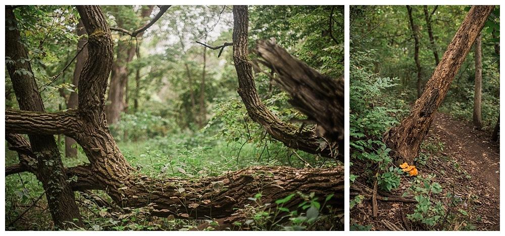 Eva Lewin Photography -