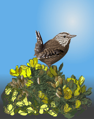 Printmaking, Poems & Projects - The Wren in the Furze- Prices vary by size 8.5 inches x 11 quoted