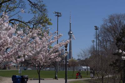 Damon Lum Photography - Trinity Bellwoods Park, Toronto