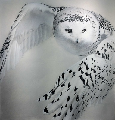 robert thibault - Harfang de neiges 122 cm x 122 cm