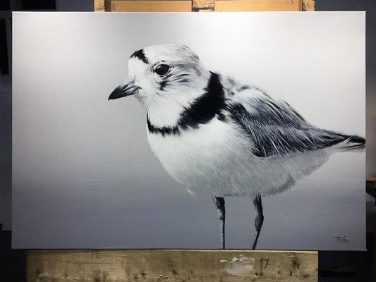 robert thibault - Pluvier siffleur 60 cm x 90 cm