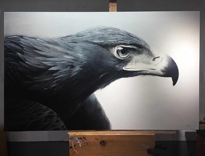 robert thibault - Aigle 60 po x 36 po