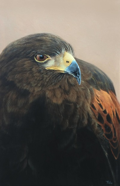 robert thibault - Aigle royal 24 po x 36 po