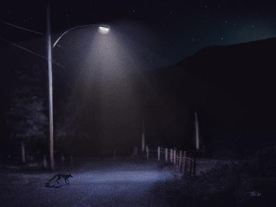 robert thibault - Un renard la nuit