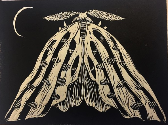Mary Sundstrom - Moth Linocut 8x10 $30 Multiples available plus shipping