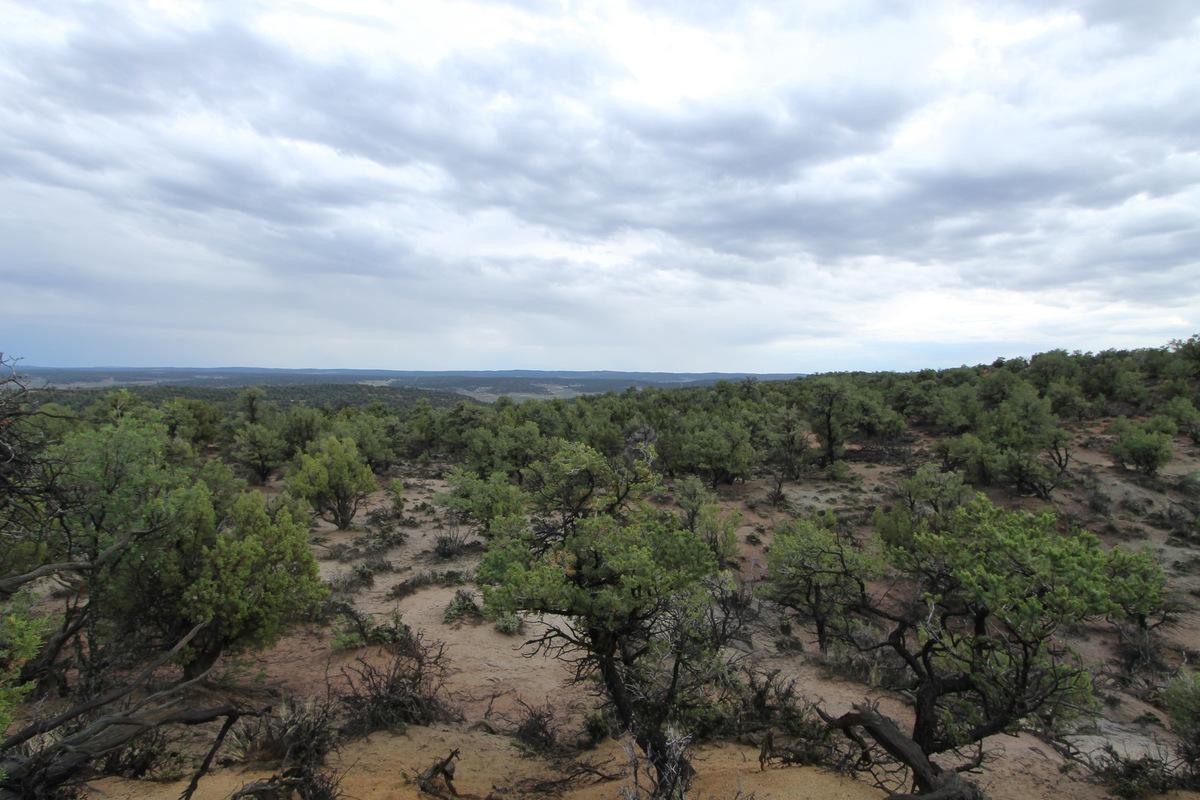 Rachel Leeson - Northern New Mexico