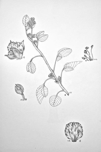 Portafolio - Ilustracion cientifica 2013