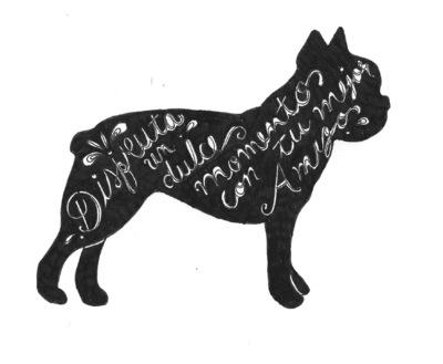 Portafolio - Boston terrier 2015