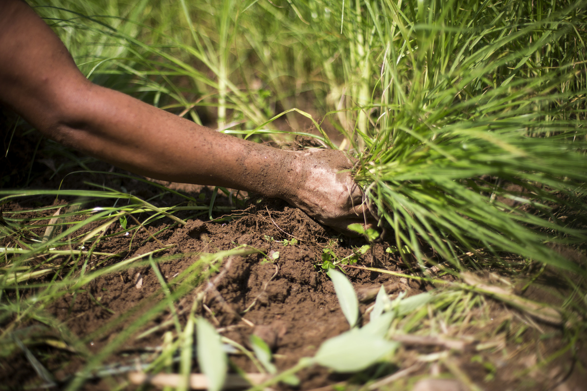Jennifer Gonzalez | Multimedia Photojournalist - Santoshi Rai harvests millet on her farm in Tribeni. Nepal, 2013.