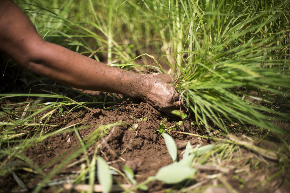 Jennifer Gonzalez | Multimedia Photojournalist - Santoshi Rai harvests millet on her farm in Tribeni. Nepal, 2013.