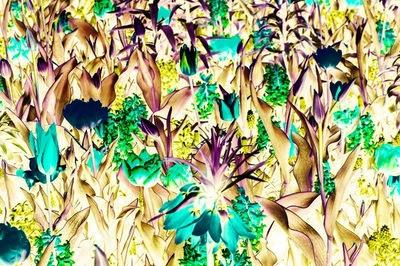 Andy Gershon - Keukenhof Gardens (Turquiose and Yellow Variations) #7