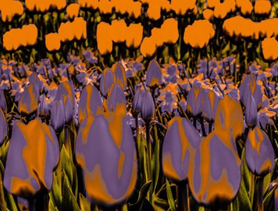 Andy Gershon - Keukenhof Gardens (Purple and Orange Variations) #6