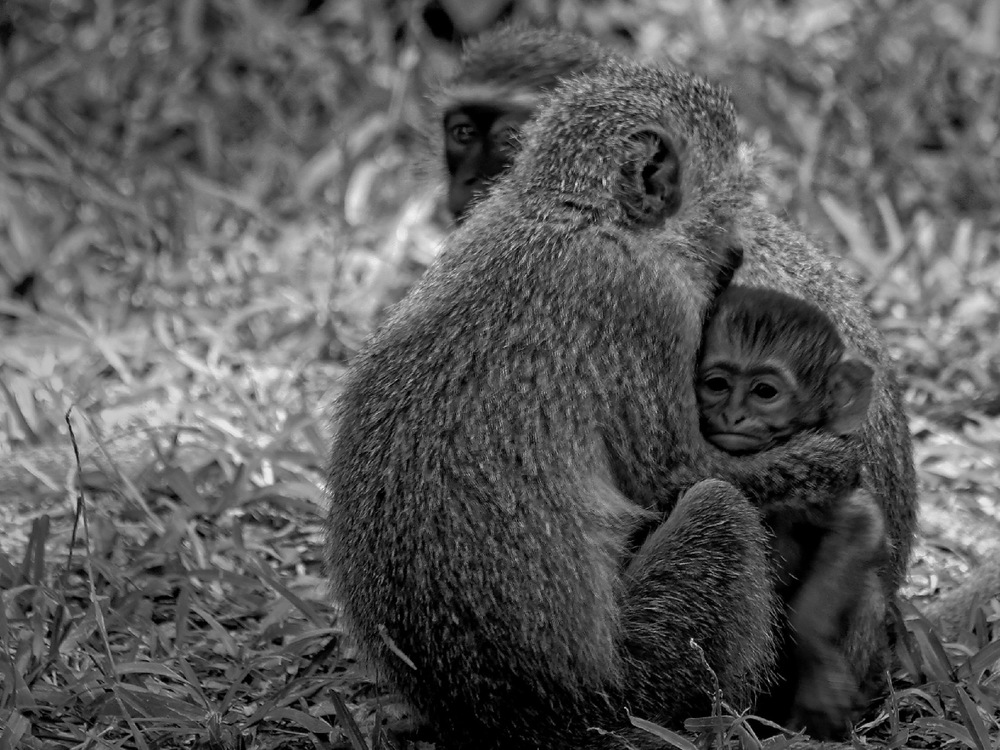 Markus  Gahnfelt Images - Wildlife