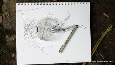ART+BIO Collaborative