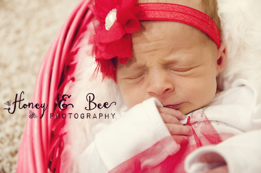 Honey and Bee Photography - Newborn Photography